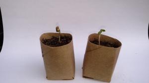 cool-one-seedlings